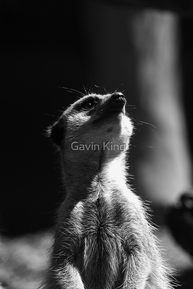 Inquisitive by Gavin King