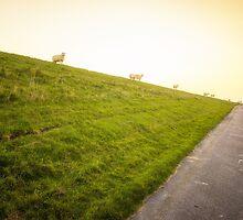 sheeps on the North Sea dike by novopics