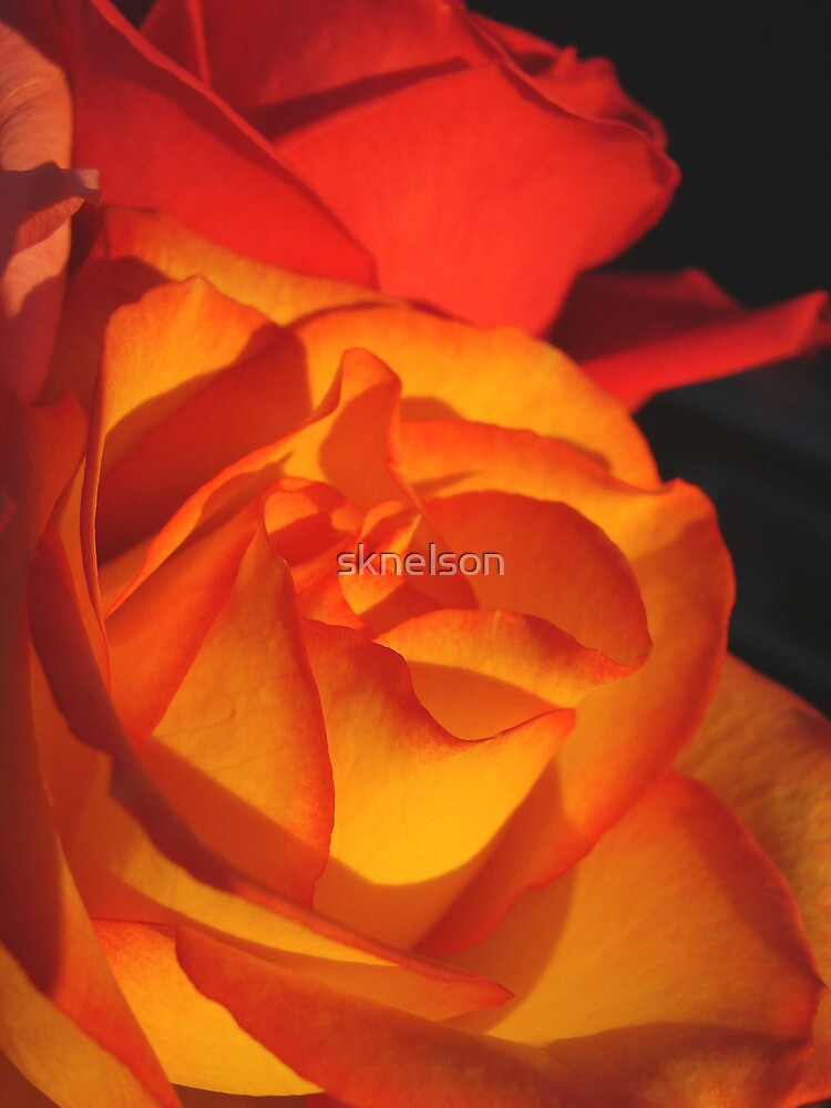 From Someone I Love by sknelson