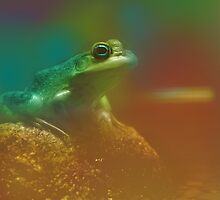 Frog by monicamakesthings
