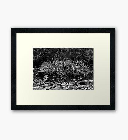 Blackwood Framed Print