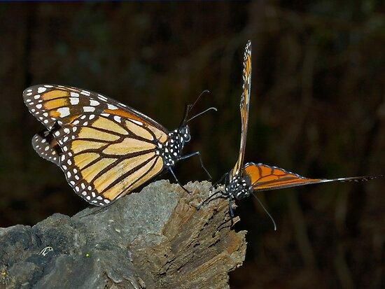 Mating Dance by Eyal Nahmias