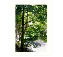Backlit Trees on River Bank Art Print