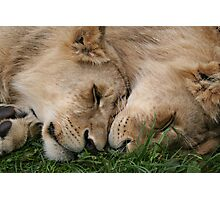 Cub Love Photographic Print