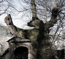 Spooky Tree by Raven88