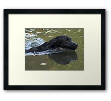 Lab Wake Framed Print