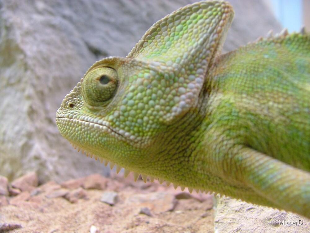 Calmer chameleon by MisterD