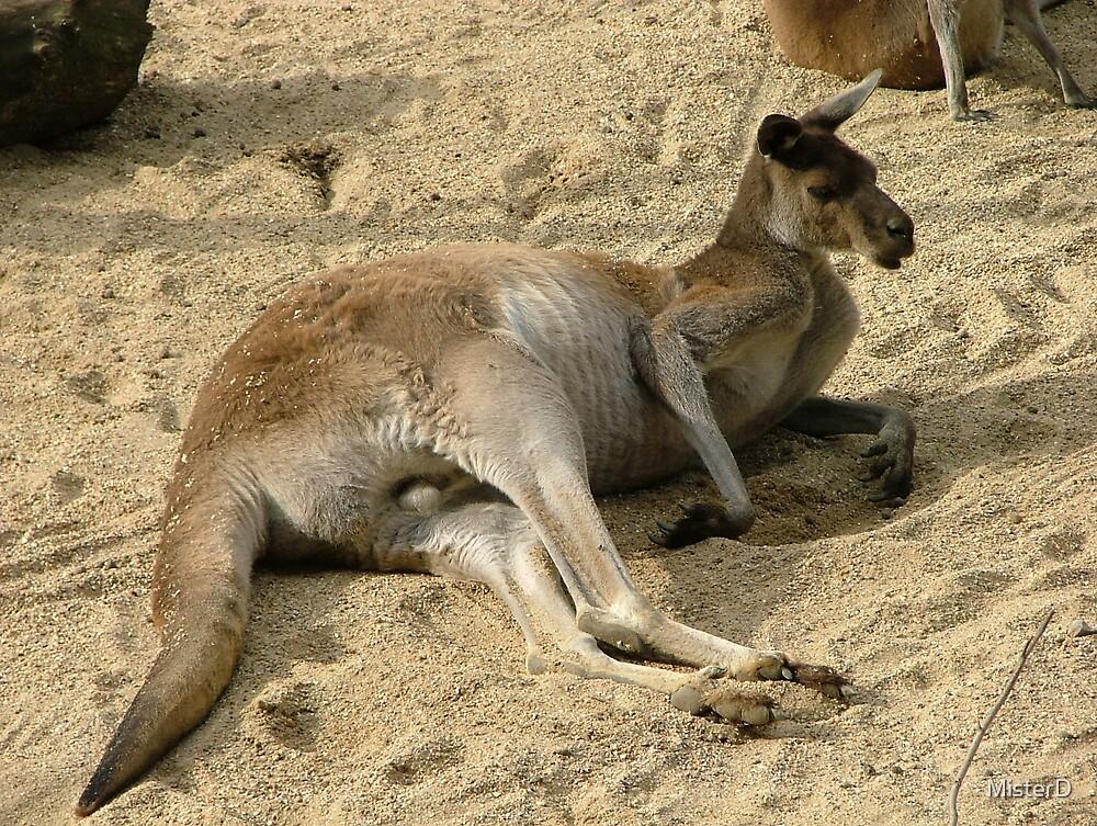 Kangaroo by MisterD