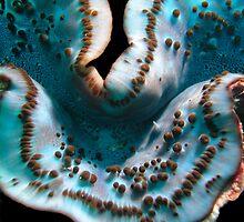 Serenity blue by Rowena  Mynott