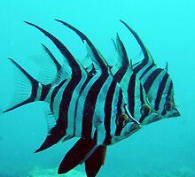 3 Fish by Rowena  Mynott