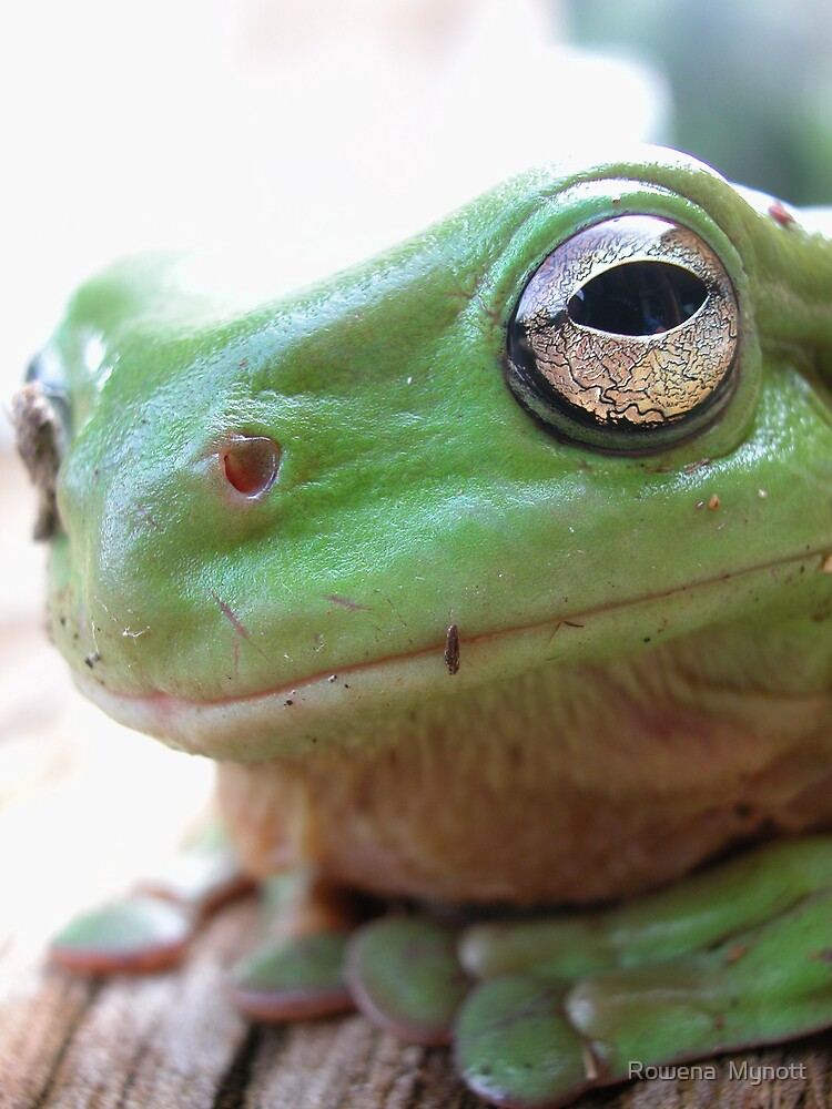 Green frog by Rowena  Mynott