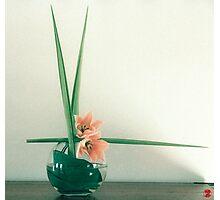 Ikebana-026 Photographic Print