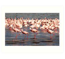 The flamingo shuffle Art Print