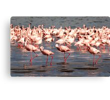 The flamingo shuffle Canvas Print