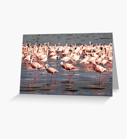 The flamingo shuffle Greeting Card