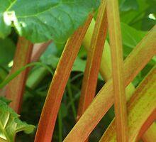 Rhubarb by Gene Cyr