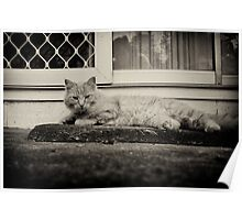 The Cat lay on the Mat Poster