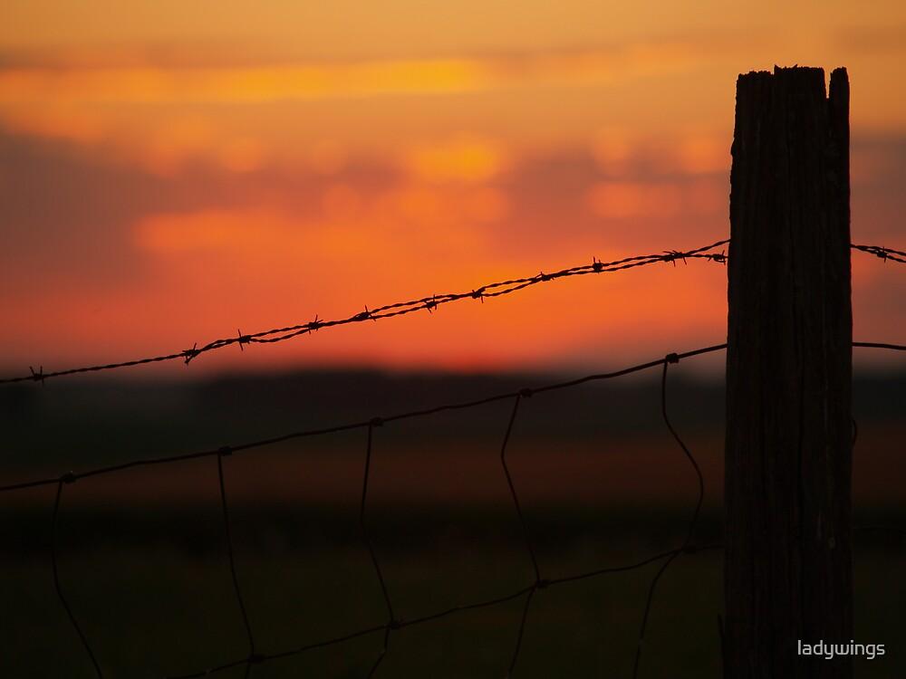 Dusk's Last Light by ladywings