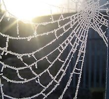 web of ice by 1163