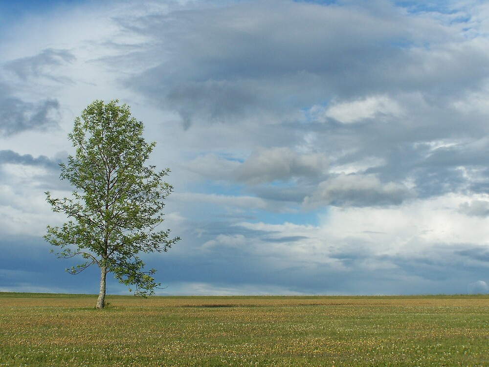Cloudy Tree 3 by Gene Cyr