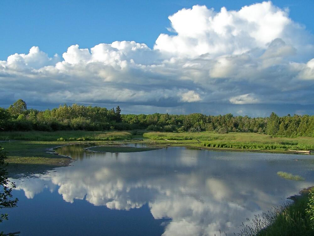 Pond Reflections 2 by Gene Cyr