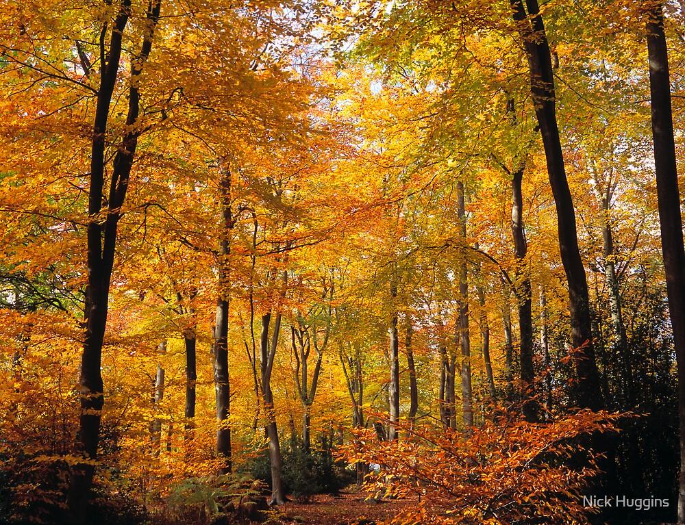 Autumnal Walk by Nick Huggins