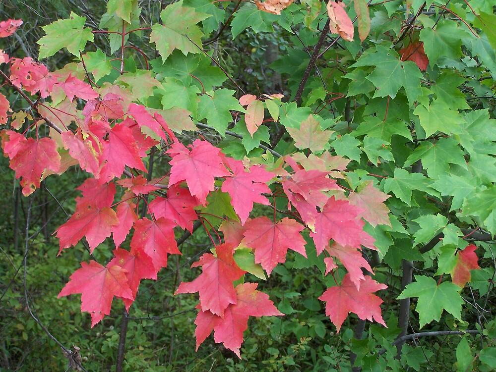Autumn Change by Gene Cyr