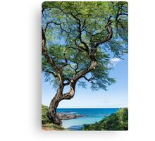 Serenity Tree Canvas Print