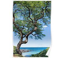 Serenity Tree Poster