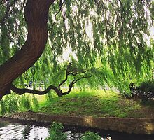 Tree Hanging over Lake by lolohannah