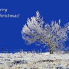Merry Christmas by Cornelia Togea