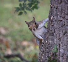 Cheeky little chap by Debbie41