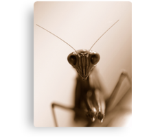Creepy crawley Canvas Print