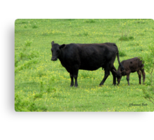 Cow and Calf in a Field of Buttercups  Canvas Print
