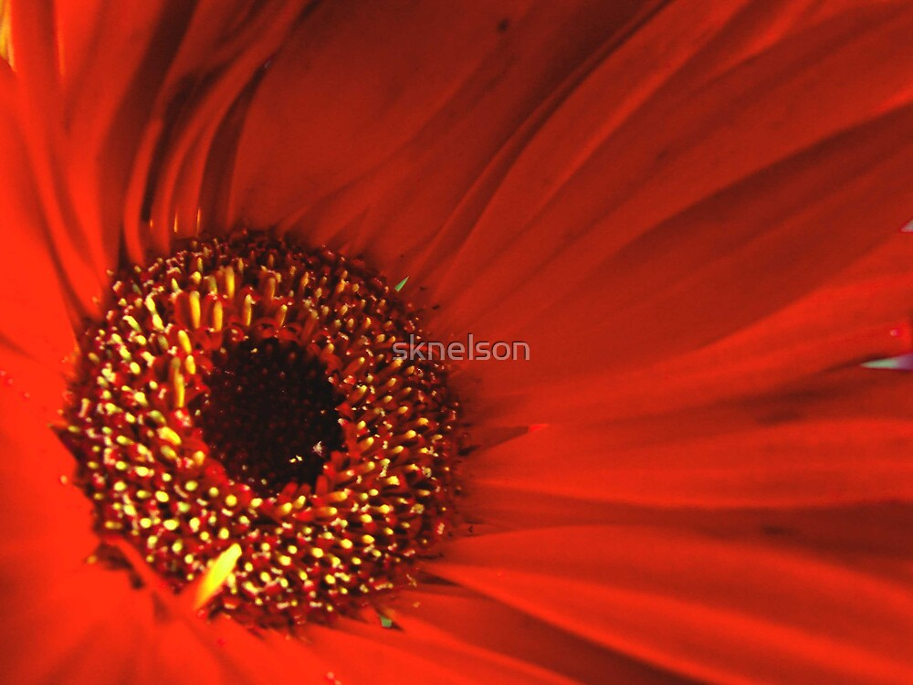 Eye of the Bloom by sknelson