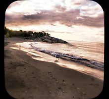 Seagulls - Along the Shore - Fine Art Photograph by HighlandGhillie