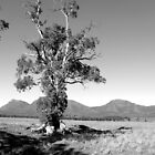Flinders Ranges by miclile