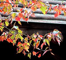 Autumn Leaves by migueldelmonte