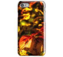Autumn rose leaves iPhone Case/Skin