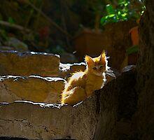 la gatta da supino by Michael Mancini