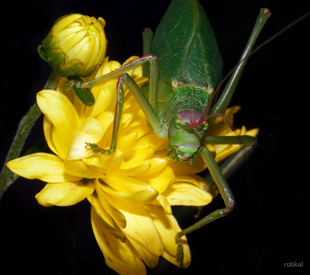 Yellow  & Green ! by robkal