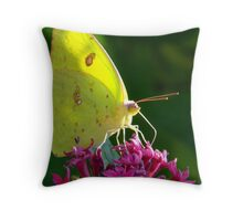 Male Cloudless Sulphur Butterfly Throw Pillow