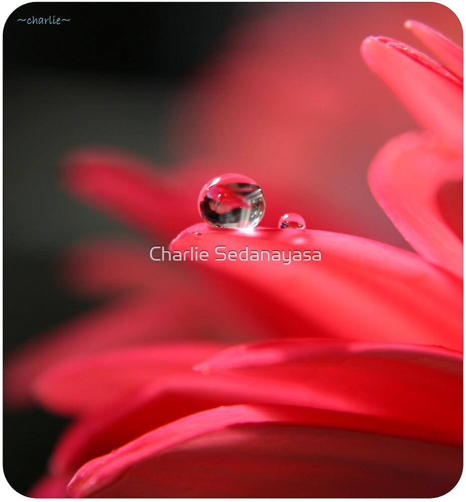 pink! by Charlie Sedanayasa