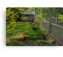 Chook Yard Metal Print