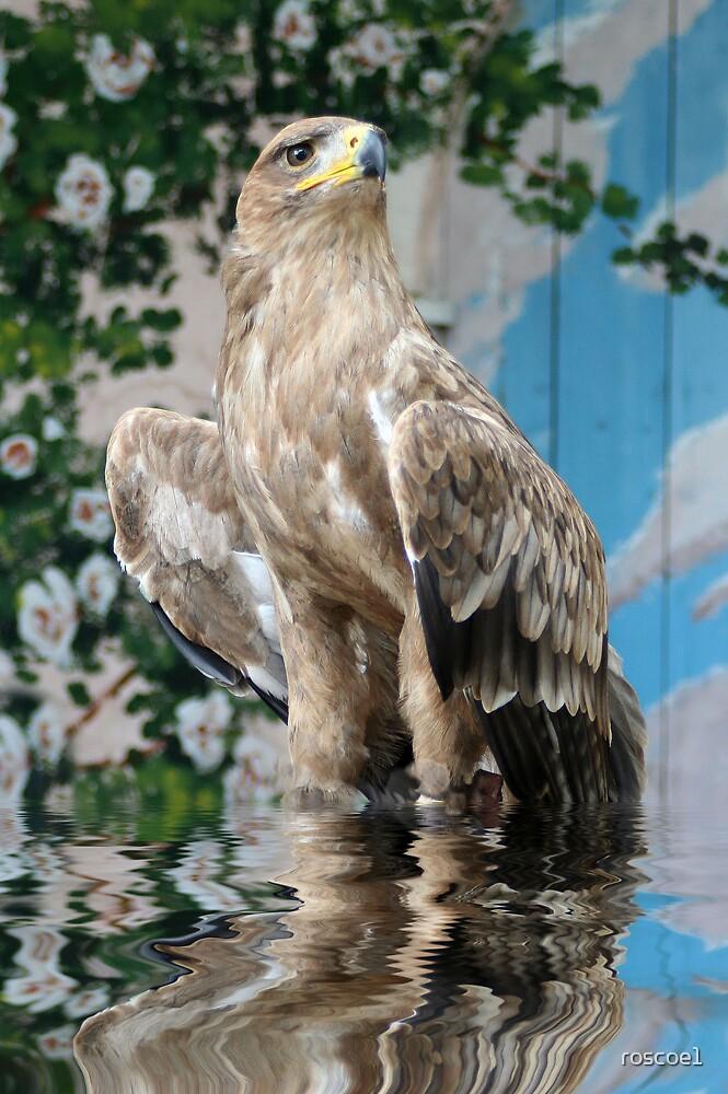 tawney in water by roscoe1