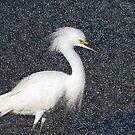 Snowy Egret by TJ Baccari Photography