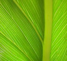 Leaf by Rowena  Mynott