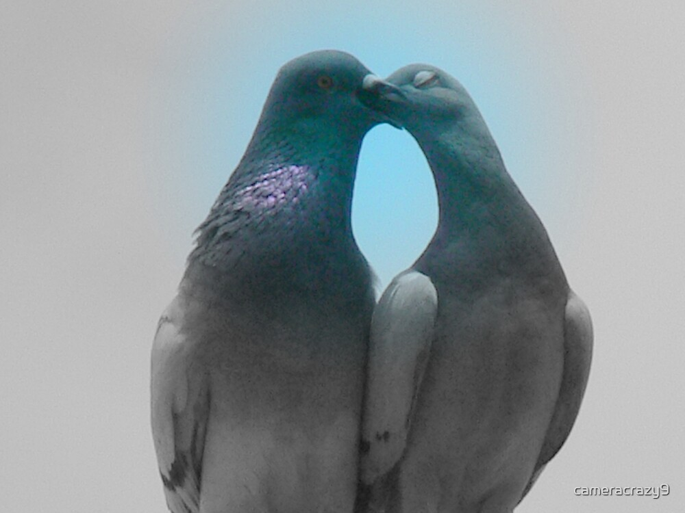 pigeons in love by cameracrazy9