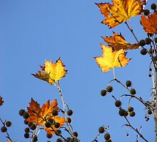 Forgotten Autumn by Brett Habener