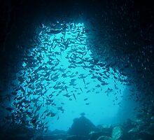 Fish Rock Cave by Rowena  Mynott
